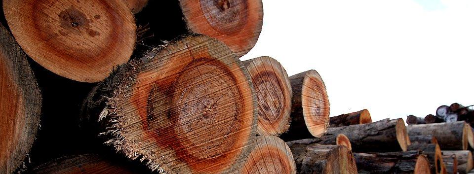 Malaysian Round Log